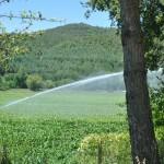 Farmers watering tobacco fields