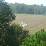 Sheep of local farmer